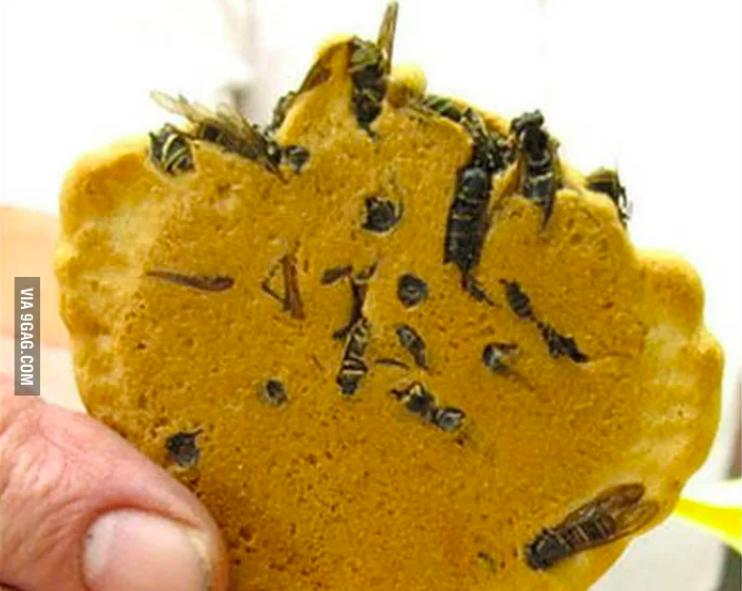 Bizarre Gerichte aus Asien: Kann man Wespen essen? Ja, in einem Reiscracker aus Japan