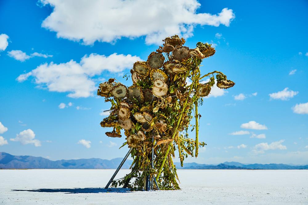Azuma Makoto - experimentelle Blumenkunst aus Japan