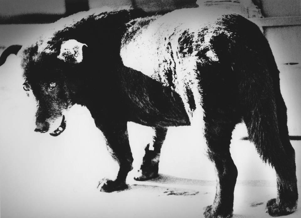 Stray Dog von Fotograf Daido Moriyama aus Japan